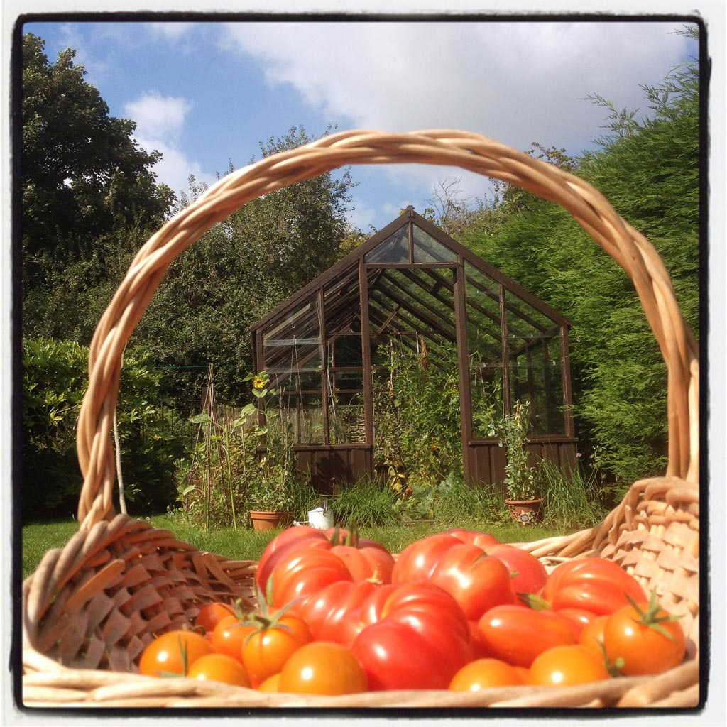 tomatoes from the greenhouse of The Pink House Lulworth
