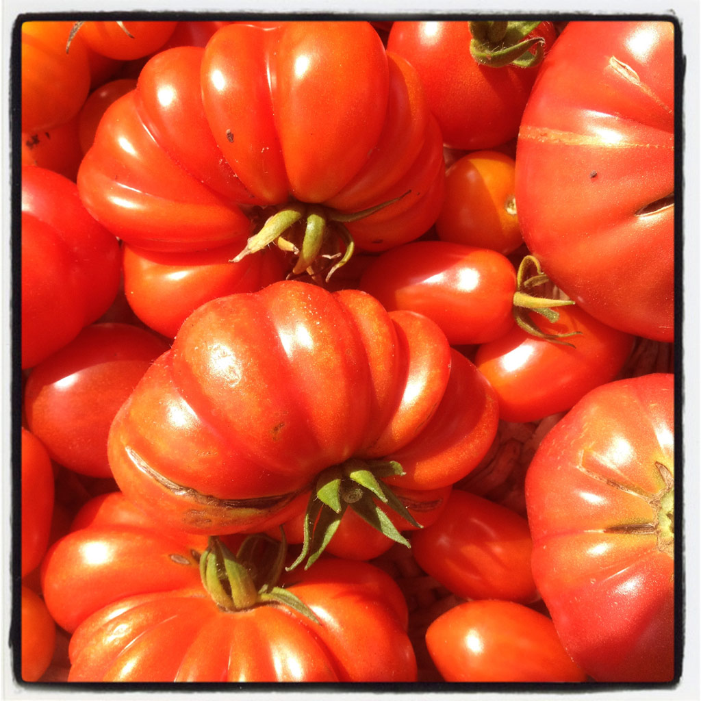 organic tomato harvest from the vintage greenhouse of The Pink House Lulworth