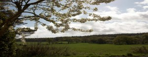 cherry blossom view from the front of The Pink House Lulworth