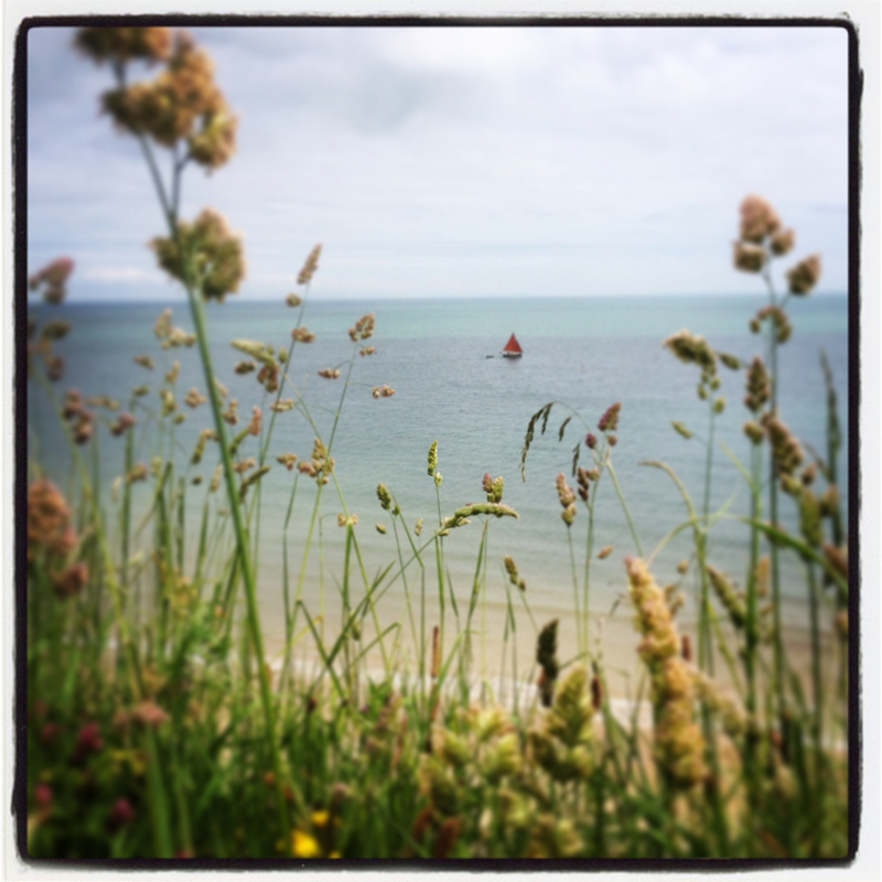 summer-meadow-above-the-sea-at-The-Pink-House-Lulworth
