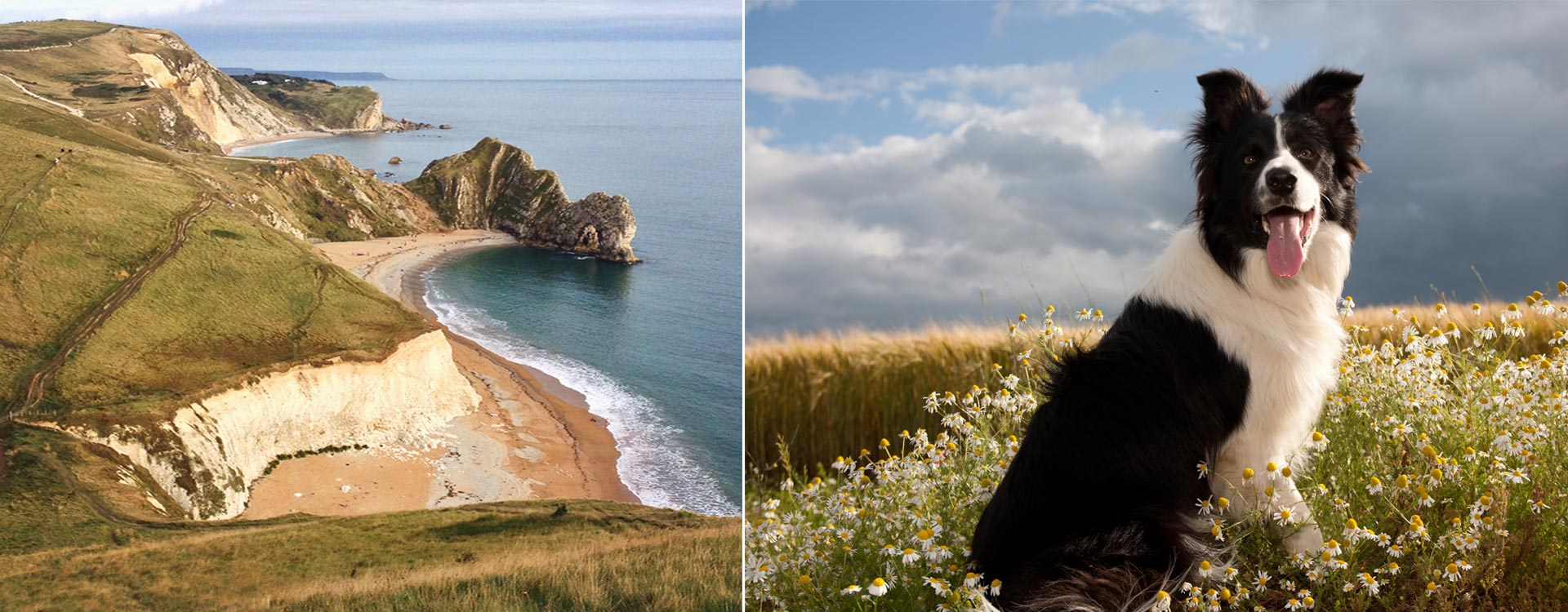 we welcome well behaved pet owners and their dogs to enjoy the walking trails along the Jurassic coast paths